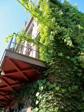 Vertical garden!