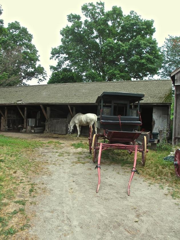 horse at Mystic