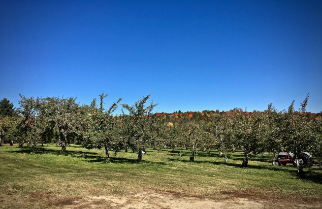 AppleOrchard3