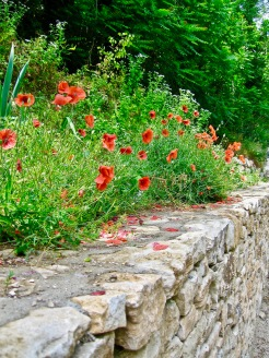 IMG_1040 Poppies